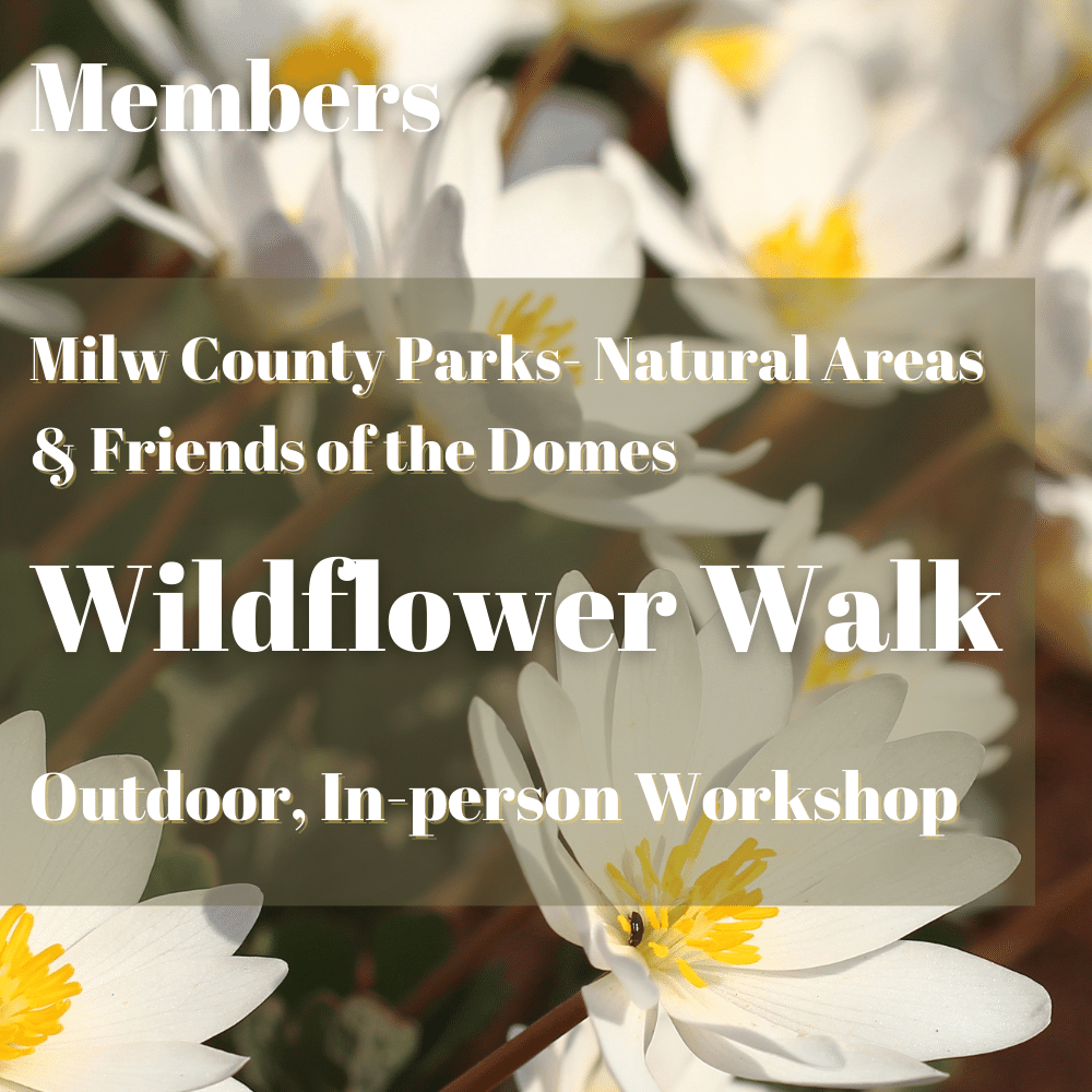 Member: Wildflower Walk