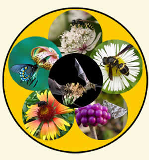 Non-Member: Controlling Pests with Biological & Natural Control