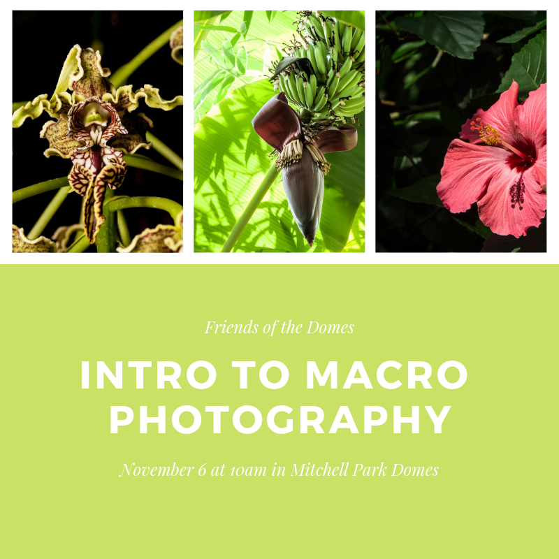 Non-Member: Intro to Macro Photography